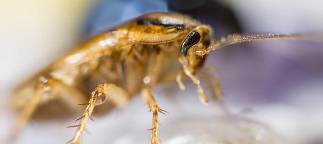 Από που μπαίνουν κατσαρίδες στο σπίτι
